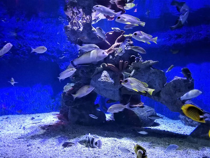 There are lots of fish tanks in Hurghada Grand aquarium. There you see  marine life.